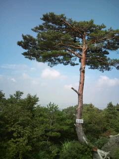 五頭登山2